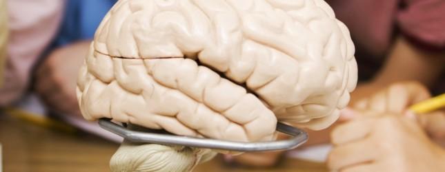 brain-645x250